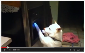 Dog Drinks From Fridge Water Dispenser